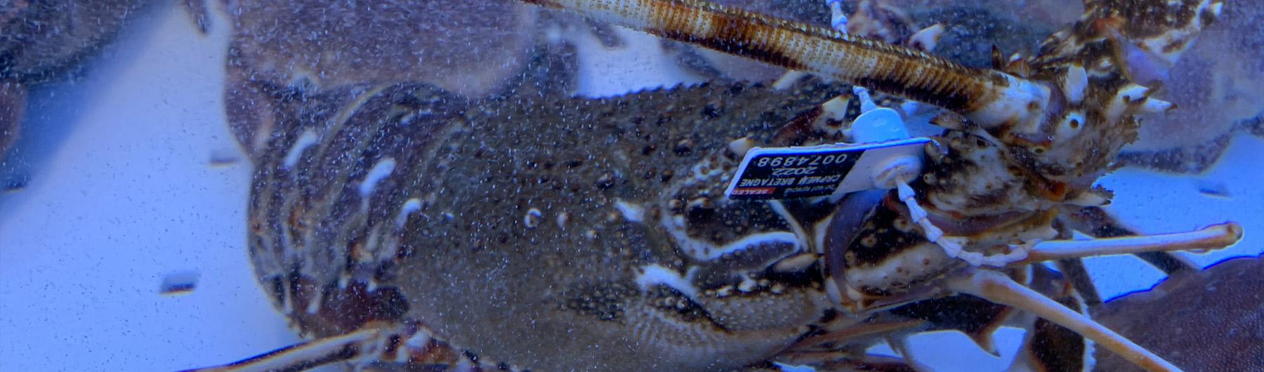 Poissonnerie la cotriade poissonnerie audierne vente de for Vente de poisson